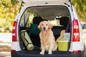 attacher-chien-voiture